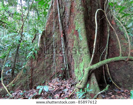 Tree roots and dense vegetation in Amazon jungle, Peru