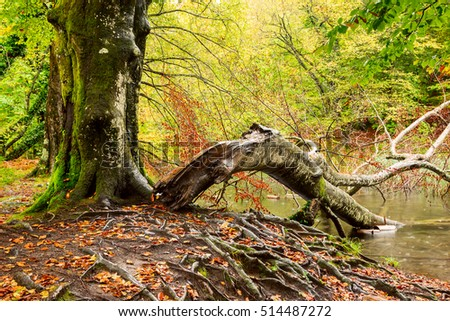 Tree roots and green forest in national park Plitvica, Croatia