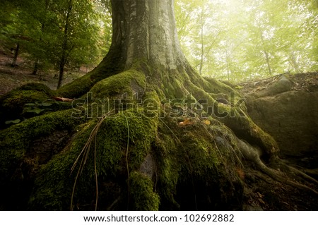 tree roots and sunshine in a green forest - stock photo
