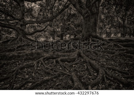 tree roots-back and white background