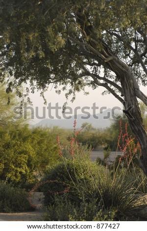 tree scene - stock photo