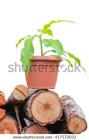 Tree Seedling in pots on timber. isolated on white background with clipping path.
