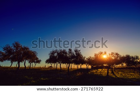 Tree shadow with sunset