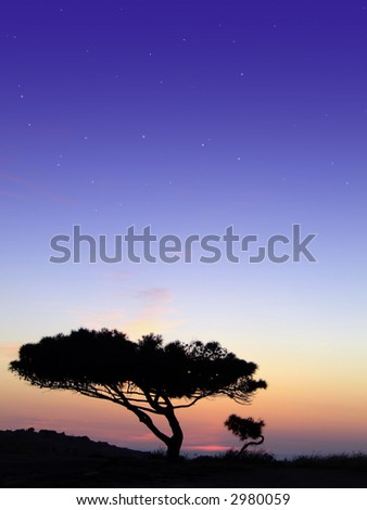 Tree silhouette, against summery natural sunset in the Mediterranean island of Malta - stock photo