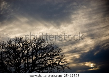 Tree Silhouette and Clouds - stock photo