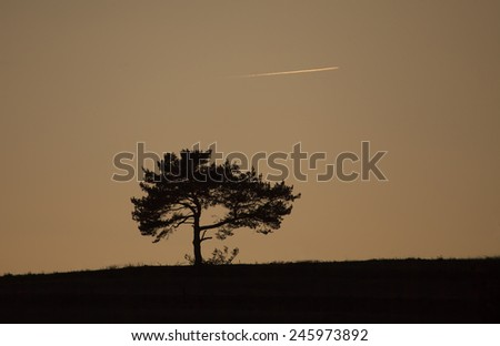 tree silhouette and plane trail on sunset dusk time, sepia sky tone  - stock photo