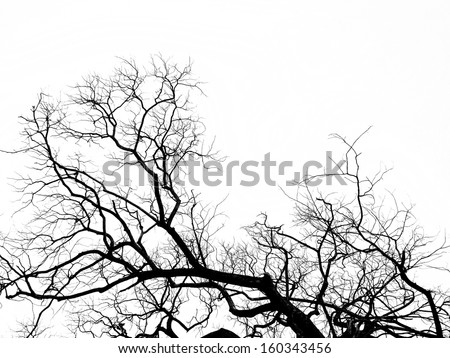 Tree silhouette art white background.