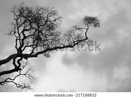 tree silhouette black and white background - stock photo