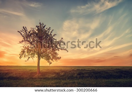 tree silhouette on rural field of grass on sunset. natural vintage summer background