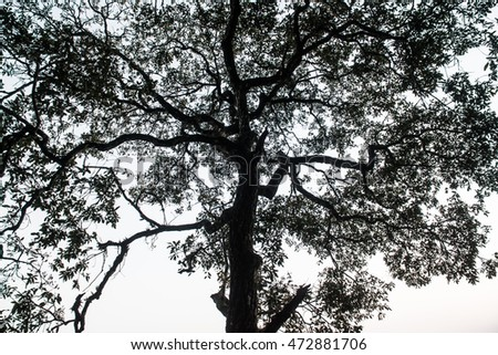 Tree Silhouette, Thailand