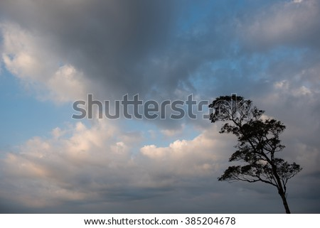 Tree silhouettes against blue sky.
