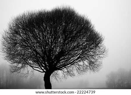 Tree silhouettes on a foggy day in December - stock photo