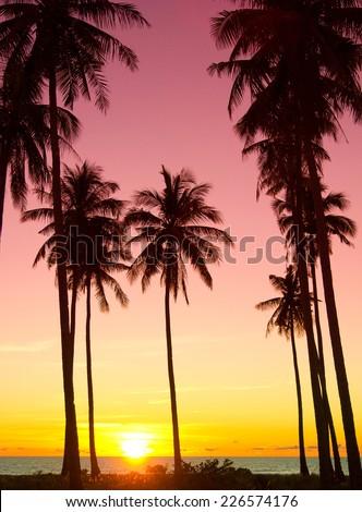 Tree Silhouettes Palm Paradise  - stock photo