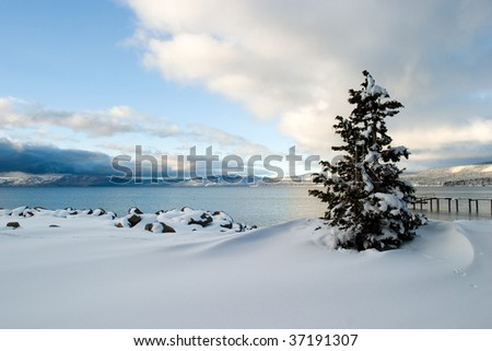 Tree Snow Lake Tahoe, California - stock photo