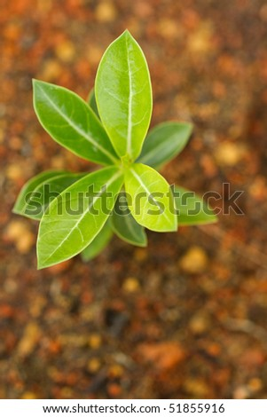 Tree & soil - stock photo