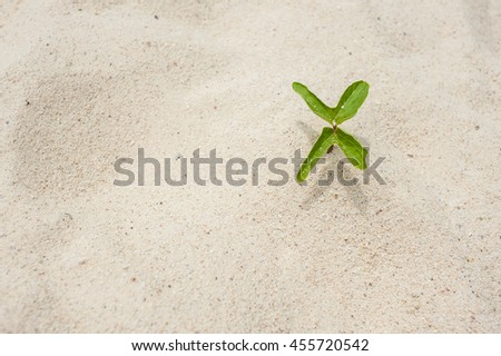 tree sprout growing in the sand - stock photo