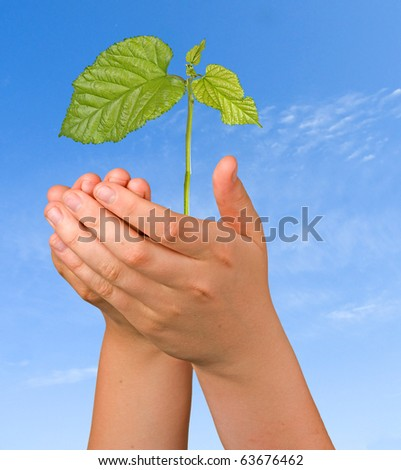 tree sprout in palms as a symbol of nature protection - stock photo
