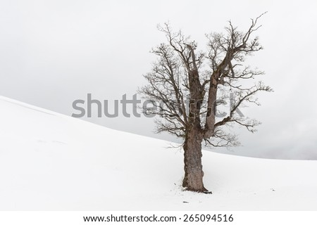 Tree standing lonely in a snow field - stock photo