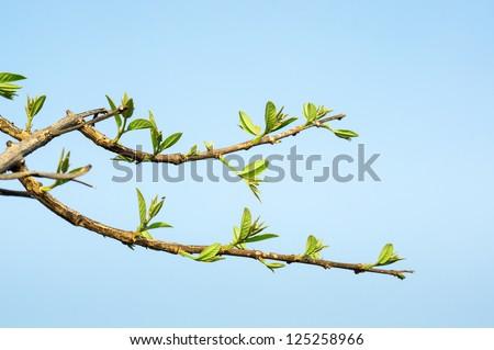 Tree stick against blue sky background. - stock photo