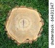 Tree stump - stock photo