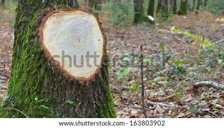tree stump after logging - stock photo