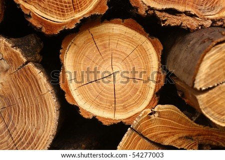 tree stump background - stock photo