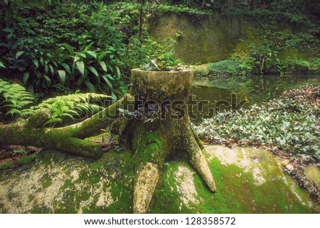 Tree stump in a tropical forest in Rio - stock photo