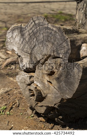 tree stump on the white background - stock photo