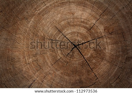 tree stump texture background - stock photo