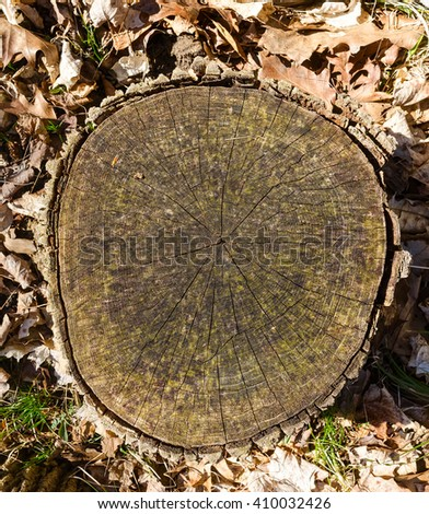 Tree stump with circles - stock photo