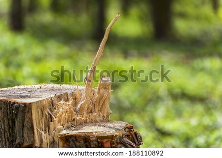 Tree stump with cut surfaces