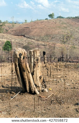 Tree stumps after deforestation and burn for agriculture in Thailand.  - stock photo
