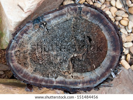 tree stumps and felled forest deforestation. - stock photo