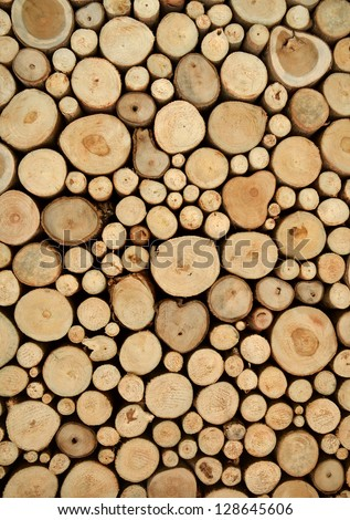 tree stumps background - stock photo