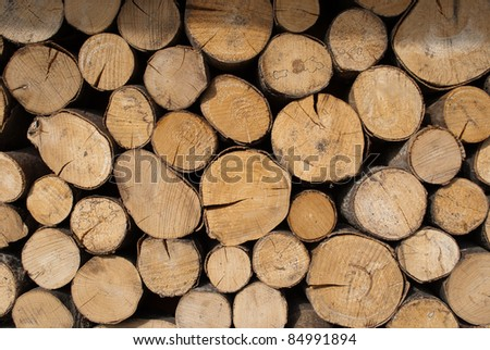 Tree stumps for background use - stock photo