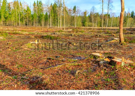 Tree stumps in deforested area - stock photo