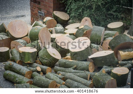 Tree stumps on the floor after felling a large tree - stock photo