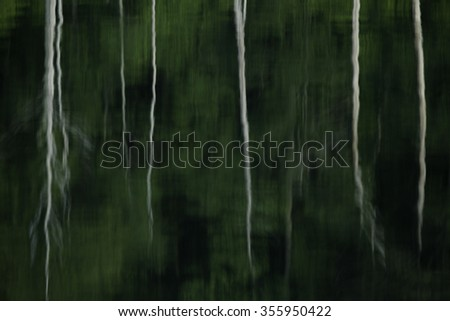 Tree Stumps reflected in water. Water reflection background. - stock photo