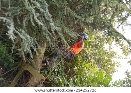 Tree surgeon climbing a tree to begin maintenance work - stock photo