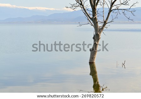 Tree that grows in water after heavy rainfall and increased level of the lake - stock photo