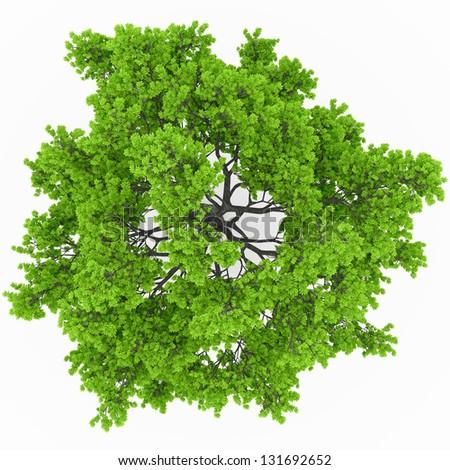 tree top view in 100Mpix - stock photo