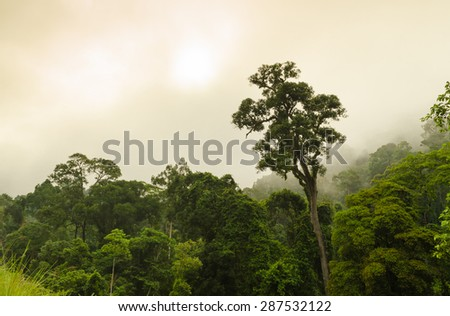 tree tops and fog - nature background - stock photo