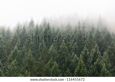 tree tops texture - stock photo