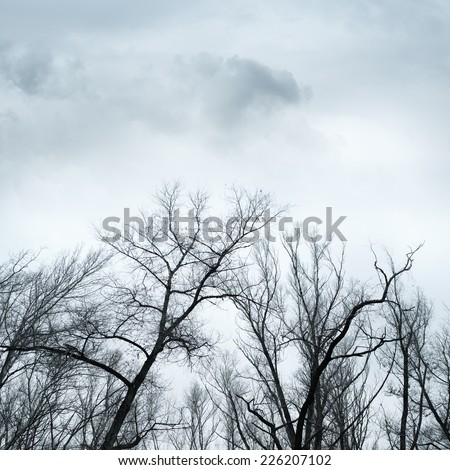 tree tops without leaves Dramatic sky over old lonely trees - stock photo