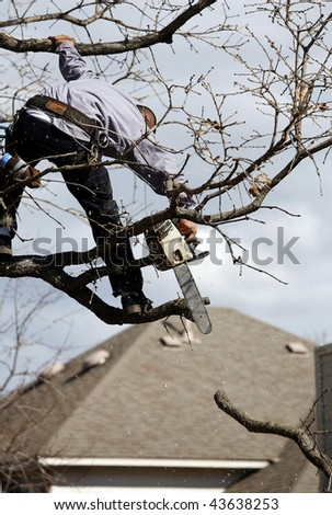 tree trimming 2 - stock photo