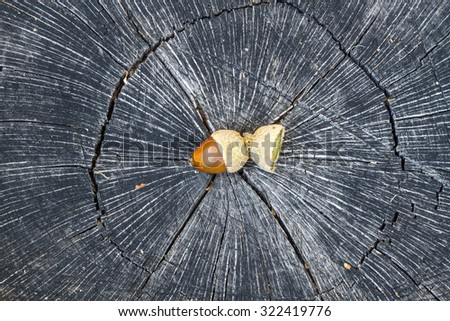 Tree trunk and acorn. - stock photo