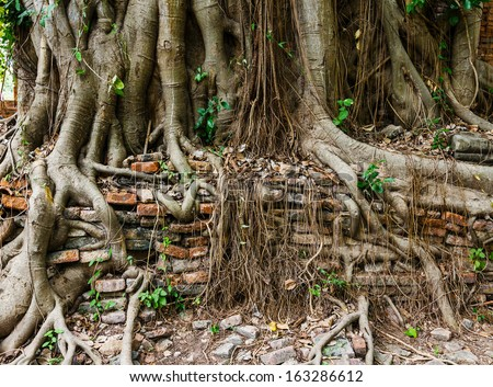 Tree trunk covered old wall - stock photo