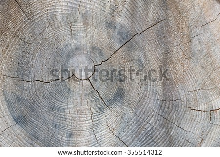 Tree trunk cross section with annual rings - stock photo