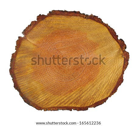 tree trunk section - stock photo
