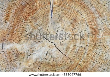 Tree trunk texture - stock photo